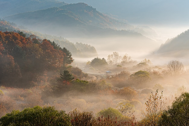 Inje-gun geheimer garten, nebel und sonnenaufgang, republik korea