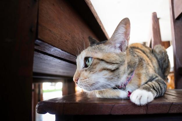 Inländische süße katze schlief ein