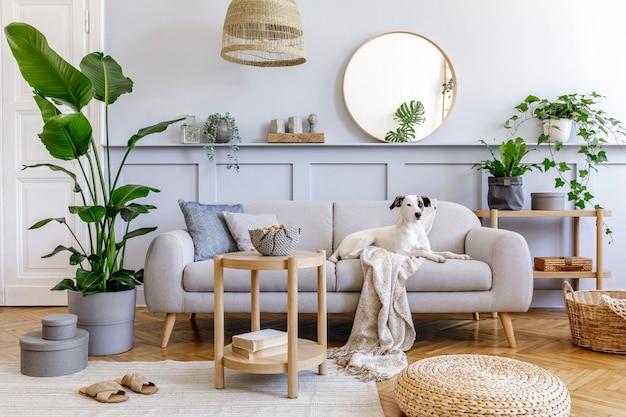 Innenarchitektur des wohnzimmers mit stilvollem grauem sofa, couchtisch, tropischer pflanze, spiegel, dekoration, kissen und eleganten persönlichen accessoires in der wohnkultur. schöner hund, der auf der couch liegt.