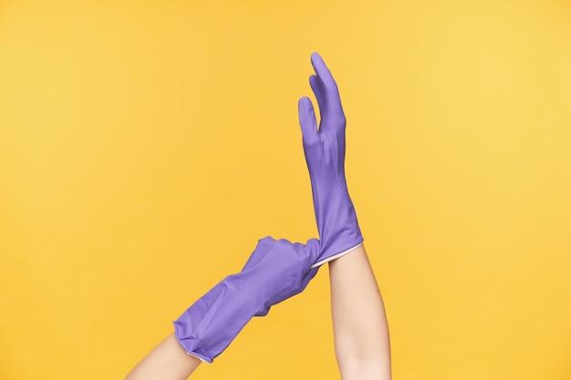 Innenfoto von weiblichen händen, die angehoben werden, während sie über gelbem hintergrund aufwerfen und violetten gummihandschuh ziehen, während sie ihn anprobieren, bevor sie frühjahrsputz machen
