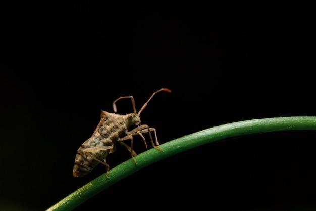 Insekt, das auf eine niederlassung geht
