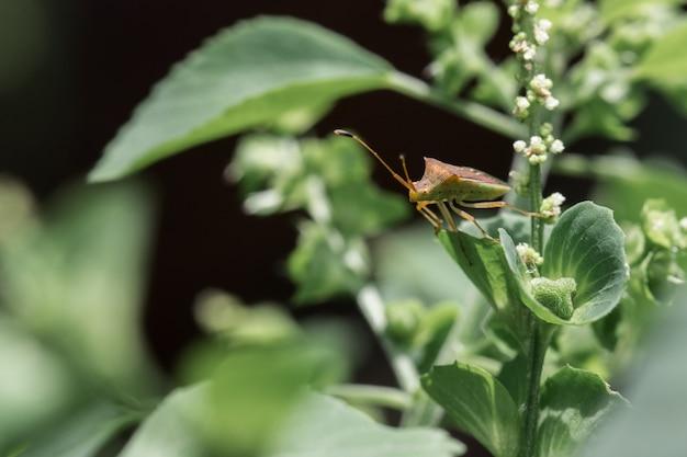 Insekten auf blättern