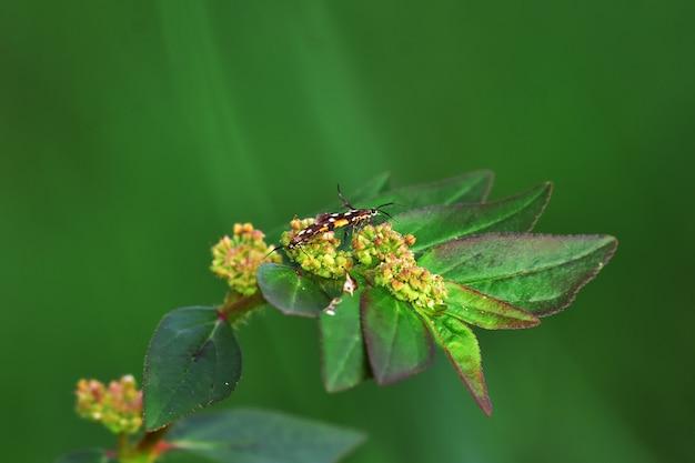 Insekten auf blumen