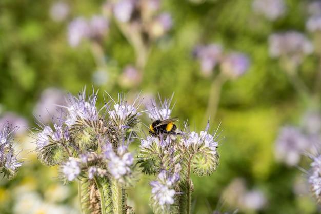 Insekten auf den blumen auf dem feld tagsüber