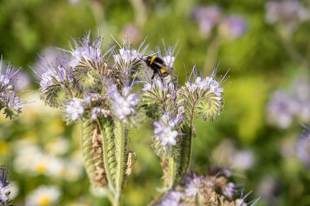 Insekten auf den blumen auf dem feld während des tages