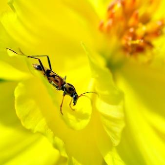 Insekten auf gelben blüten