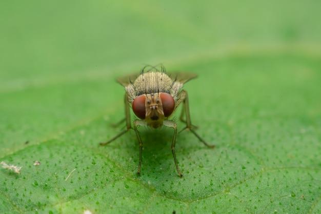Insektenfliege am blatt, fokusaugen auswählen