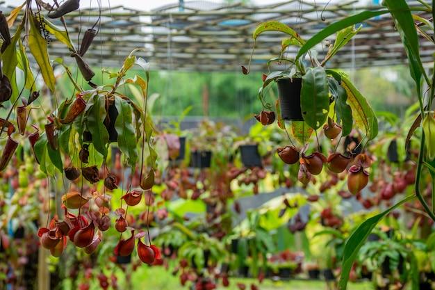 Insektenfressende pflanze