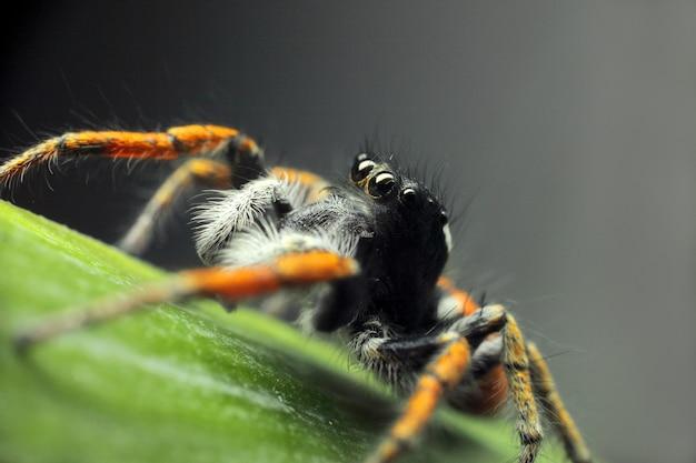Insektenspinne auf einem blatt nah oben