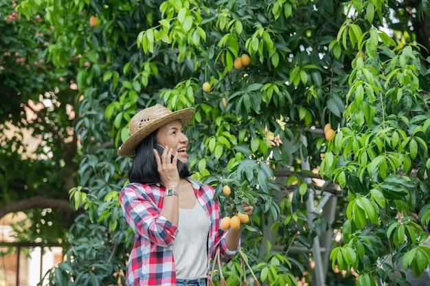 Intelligente landwirtschaft mit modernen technologien in der landwirtschaft. bäuerin mit digitalem tablet-computer, telefon in farm marian plum mit apps und internet, marian plum, marian mango. (mayongchid auf thai)
