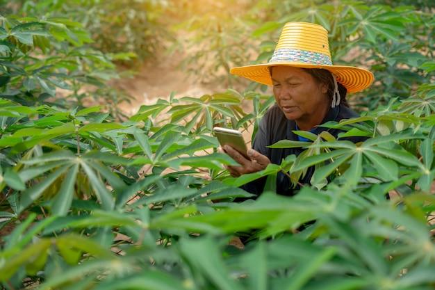 Intelligenter frauenlandwirt, der die tablette steht auf dem maniokgebiet für die prüfung ihres maniokafeldes hält. landwirtschaft und smart farmer erfolgskonzept
