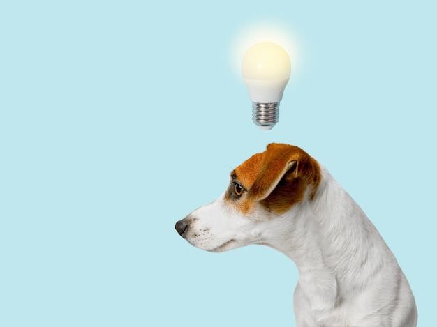 Intelligenter hund mit einer glühbirne, über dem kopf, profilansicht. idee konzept.