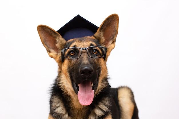 Intelligenter hundestudent porträt eines süßen deutschen schäferhundes, der eine abschlusskappe in glas trägt (isoliert auf weiß), platz auf der linken seite für ihren text kopieren