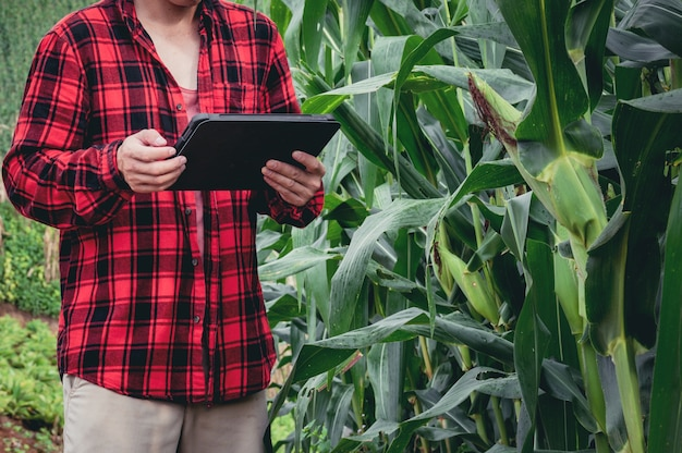 Intelligenter landwirt, der technologie-app in tablette zur überprüfung der wachstumsanalyse durch technologie in der landwirtschaft der maisfeldfarm verwendet.