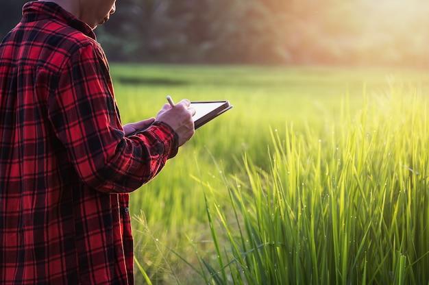 Intelligenter landwirt, der technologie im anbau von reisfeld-farmgrundstück-landwirtschaftsfeld verwendet, mann, das wachstumsanalyse durch tablette in farmfeld-landwirtschaft prüft.