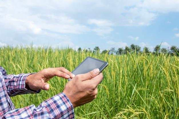 Intelligenter landwirt halten eine tablette auf dem reisgebiet. smart farming und digitales landwirtschaftskonzept