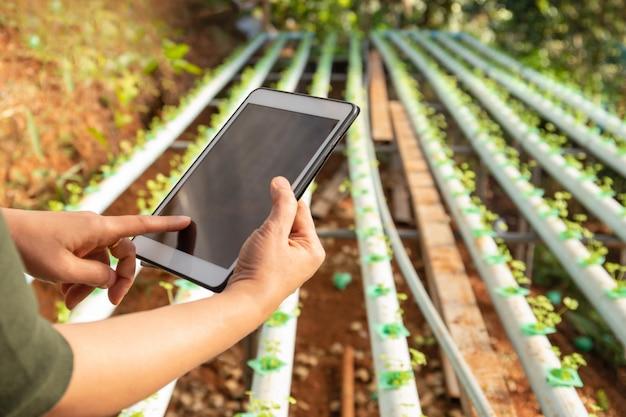 Intelligenter landwirtschaftsbauer mit tablette, die an organischem hydrokulturgemüse arbeitet.