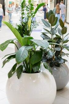 Interessante und ungewöhnliche töpfe für pflanzen mit abgerundeten formen. kreatives interieur.