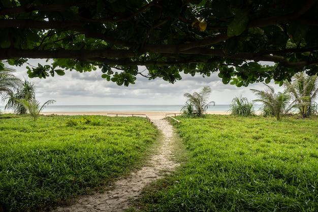 Ipomoea pes-caprae auf sandstrand. sandy-gehweg zum seestrand auf blauem himmel