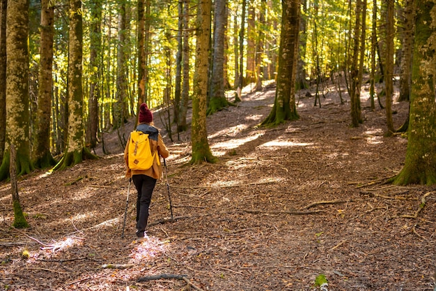Irati-wald oder dschungel im herbst, ein junger wanderer auf einer wanderung. ochagavia, nördliches navarra in spanien