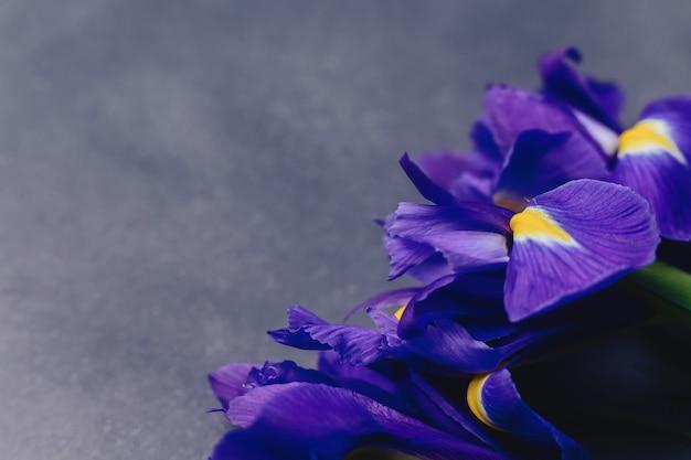 Iris auf dunklem hintergrund im studio