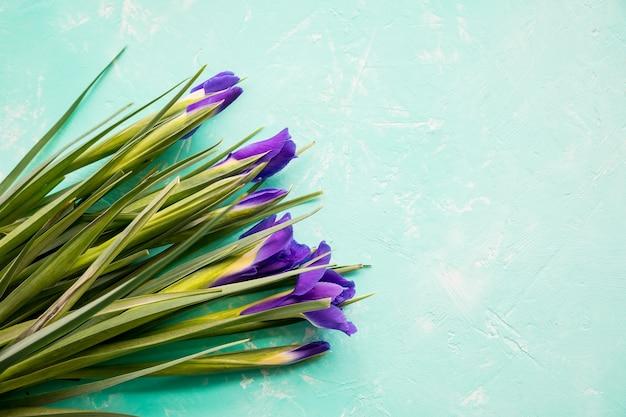 Iris blüht