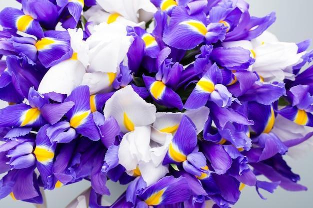 Irisblüten, frühlingsblumenmuster