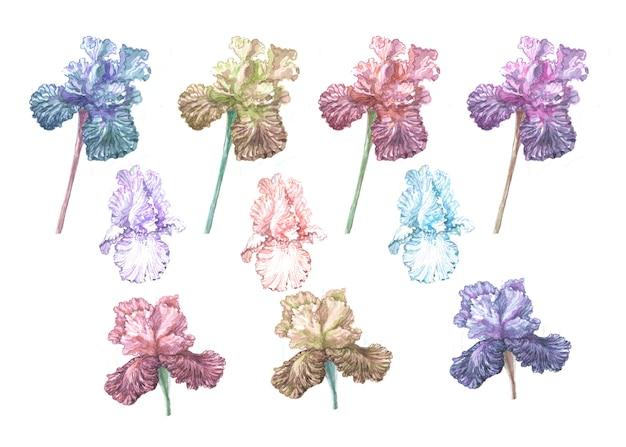 Irisblumen frühling blühen drucken sie textilpostkartenhintergrundskizze