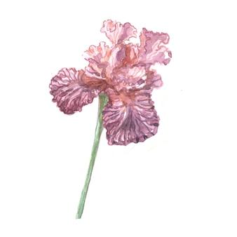 Irisblumen frühling blühende aquarellillustration hand gezeichnete postkartenhintergrundskizze gekritzelhintergrund