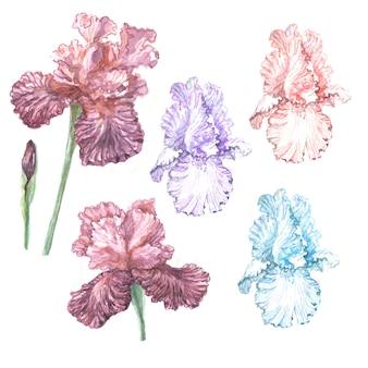 Irisblumen frühling blühende illustration handgezeichnete drucken textilpostkarte hintergrundskizze