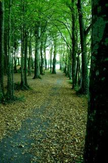Irland, treelined