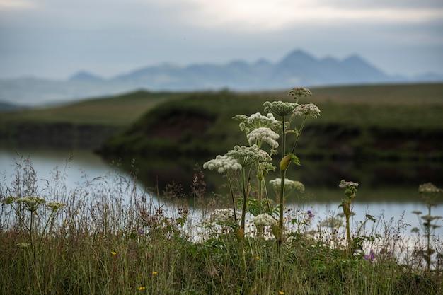 Island landschaft der schönheit