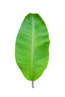 Isolat des bananenblattes auf weiß