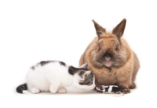 Isolierte aufnahme eines kaninchens und eines kätzchens, die vor einem weißen hintergrund sitzen