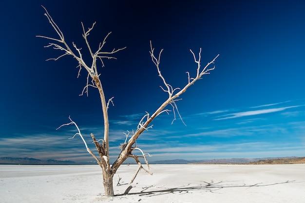 Isolierter nackter gefrorener baum, der im schneebedeckten boden wächst