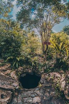 Ist das loch in einer cenote mitten im wald teil der natur