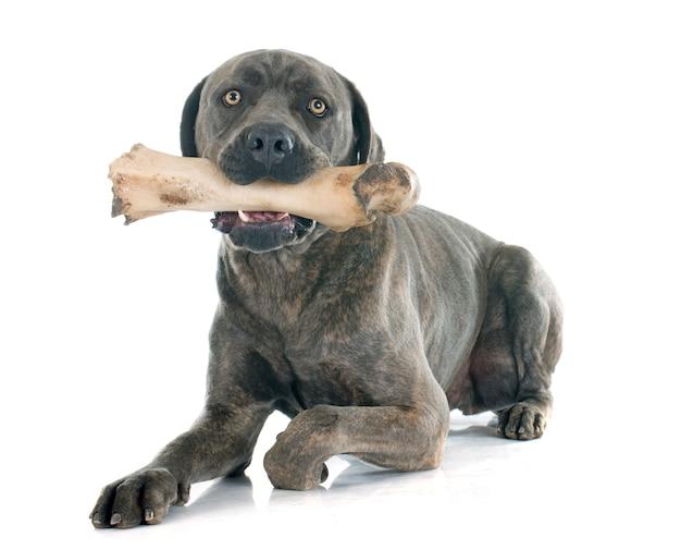 Italienischer mastiff und knochen