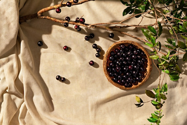 Jabuticaba-früchte auf stoffbasis, mit jabuticaba-zweig, sonnenlicht, draufsicht. platz kopieren