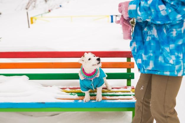 Jack-russell-terrier-hund, der im winterparkhaustierkonzept spielt playing