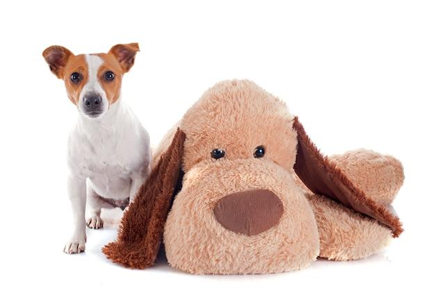 Jack russell terrier und spielzeug