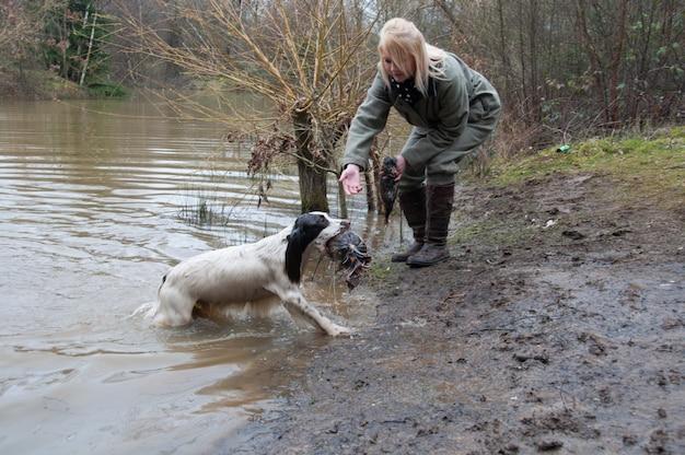 Jagd feld hund rebhuhn canin