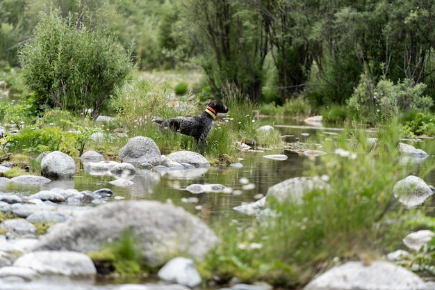 Jagdhund ruht auf dem gras, deutsche jagdwache