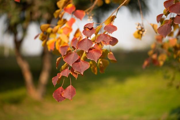 Jahreszeit der schönen herbstblätter