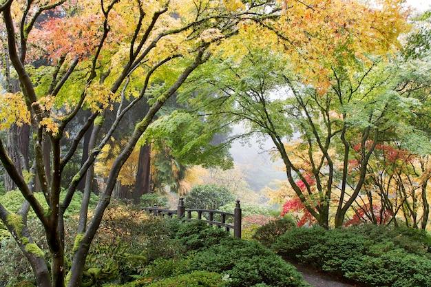 Japanische ahornbaum-überdachung durch die brücke