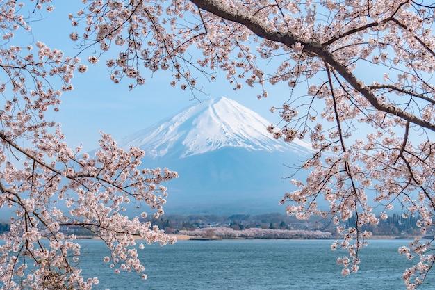 Japanische sakura und mt. fuji am kawaguchiko see in voller blüte zur frühlingssaison.