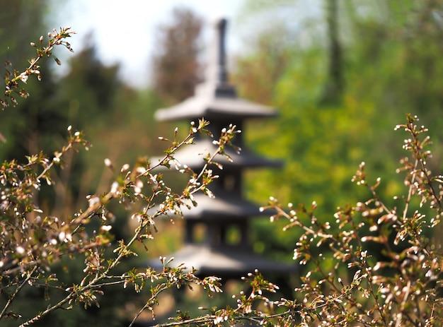Japanischer garten. beginn der blüte im frühjahr. frühlingsblumenhintergrund. die ersten primeln in der frühlingssonne.