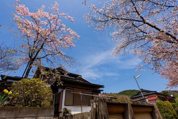 Japanisches haus mit kirschblüte oder kirschblüte