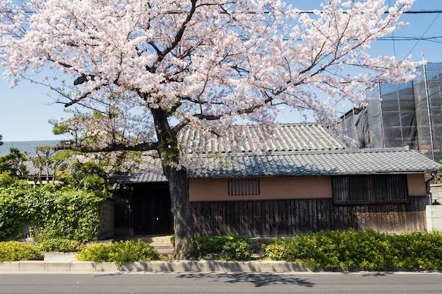 Japanisches haus mit weißer kirschblüte