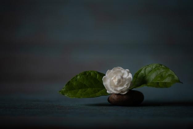 Jasminblüte auf einer alten holzoberfläche.