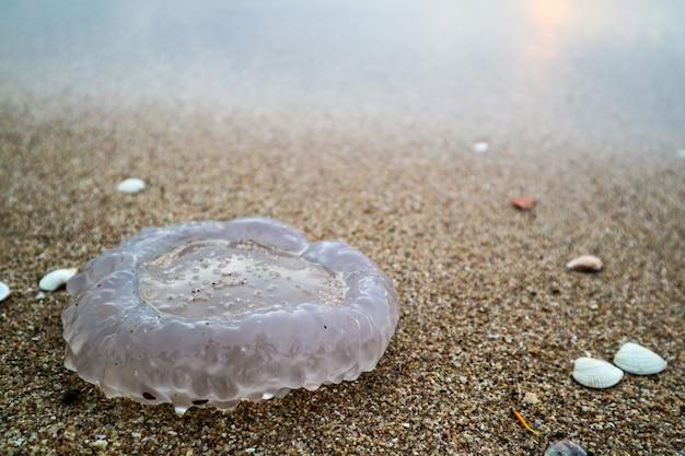 Jellyfish cup ist eine welle, die durch einen sturm am strand aufgetaucht ist